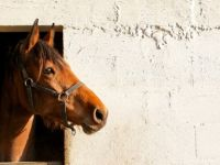 Het Beste Paard van Stal