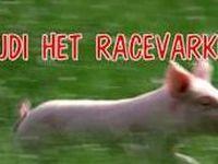 Rudi het racevarken